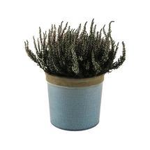Glazed Herb Pot Turquoise