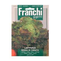 Lettuce Rosso of Trento