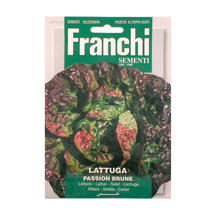 Lettuce Passion Brune