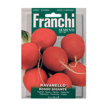 Radish of Sardegna Seeds